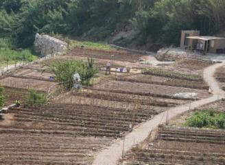 Vecinos y asociaciones de Gandia comienzan a recibir la «llave» de los huertos municipales