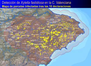 Oliva passa a ser municipi en risc d'afectació per la plaga de la Xylella fastidiosa